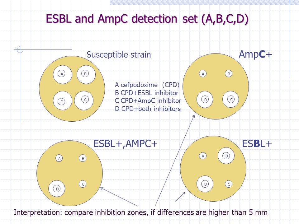 ESBL and AmpC detection set (A,B,C,D) Susceptible strain AmpC+ ESBL+,AMPC+ ESBL+ ABB B B A A A D CDC C D DC A cefpodoxime (CPD) B CPD+ESBL inhibitor C CPD+AmpC inhibitor D CPD+both inhibitors Interpretation: compare inhibition zones, if differences are higher than 5 mm