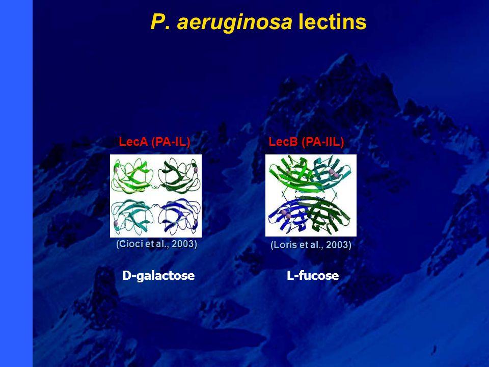 (Cioci et al., 2003) (Cioci et al., 2003) LecA (PA-IL) (Loris et al., 2003) (Loris et al., 2003) LecB (PA-IIL) P. aeruginosa lectins D-galactoseL-fuco