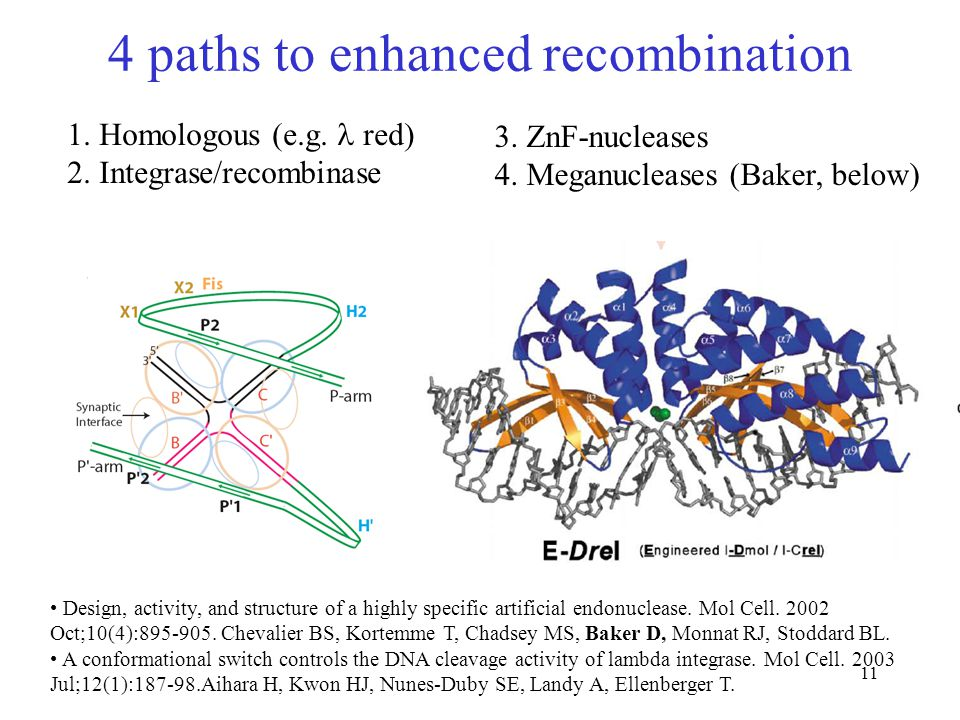 11 4 paths to enhanced recombination Design, activity, and structure of a highly specific artificial endonuclease.