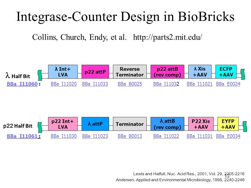 12 Integrase-Counter Design in BioBricks λ Xis +AAV ECFP +AAV λ Int+ LVA BBa_E0024BBa_I11020BBa_I11021 p22 attP BBa_I11033 Reverse Terminator BBa_B0025 p22 attB (rev comp) BBa_I1103BBa_I11032BBa_I11060BBa_I11060 : P22 Xis +AAV EYFP +AAV p22 Int+ LVA BBa_E0034BBa_I11030BBa_I11031 λ attP BBa_I11023 Terminator BBa_B0013 λ attB (rev comp) BBa_I11022BBa_I11061BBa_I11061 : Lewis and Hatfull, Nuc.