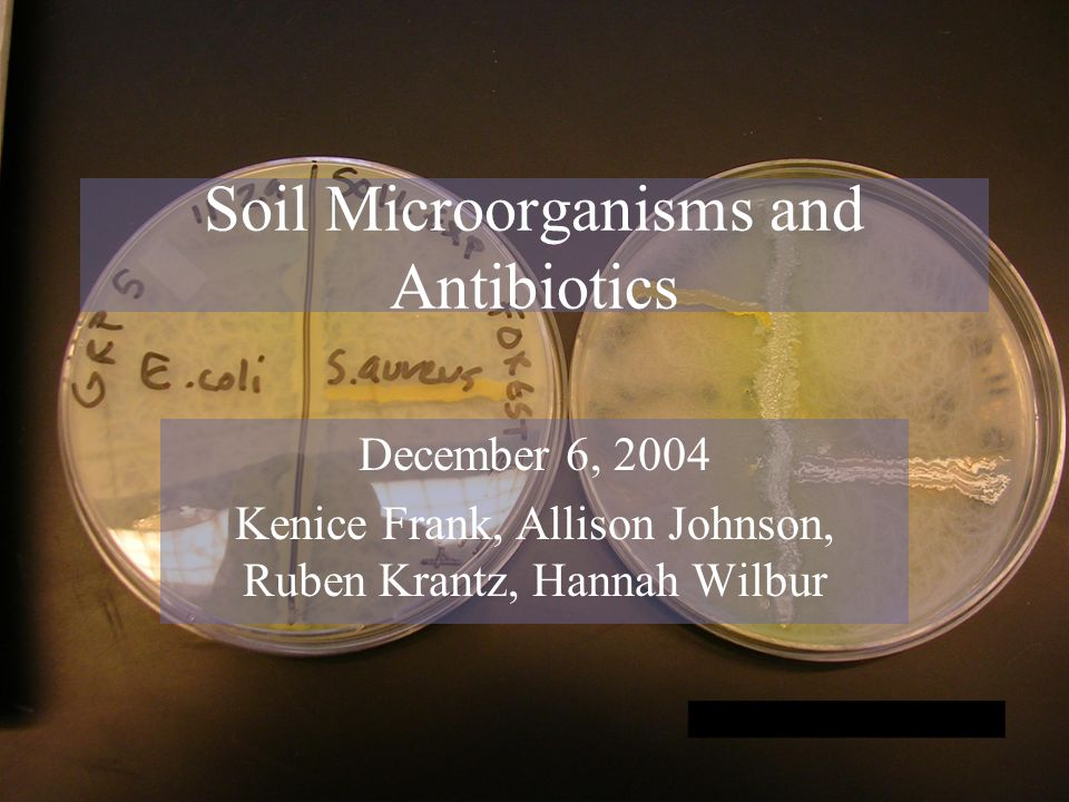 Soil Microorganisms and Antibiotics December 6, 2004 Kenice Frank, Allison Johnson, Ruben Krantz, Hannah Wilbur