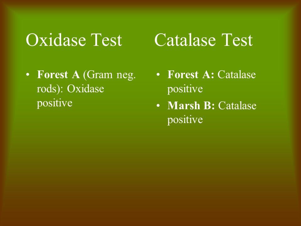 Oxidase Test Catalase Test Forest A (Gram neg.