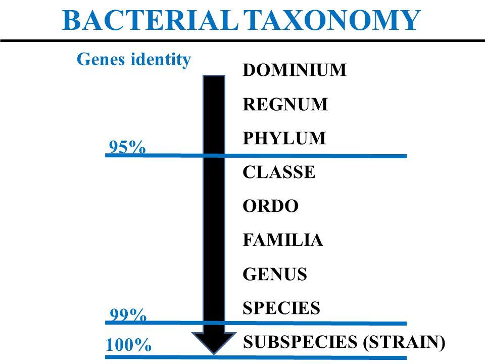 BACTERIAL TAXONOMY DOMINIUM REGNUM PHYLUM CLASSE ORDO FAMILIA GENUS SPECIES SUBSPECIES (STRAIN) 95% 99% 100% Genes identity