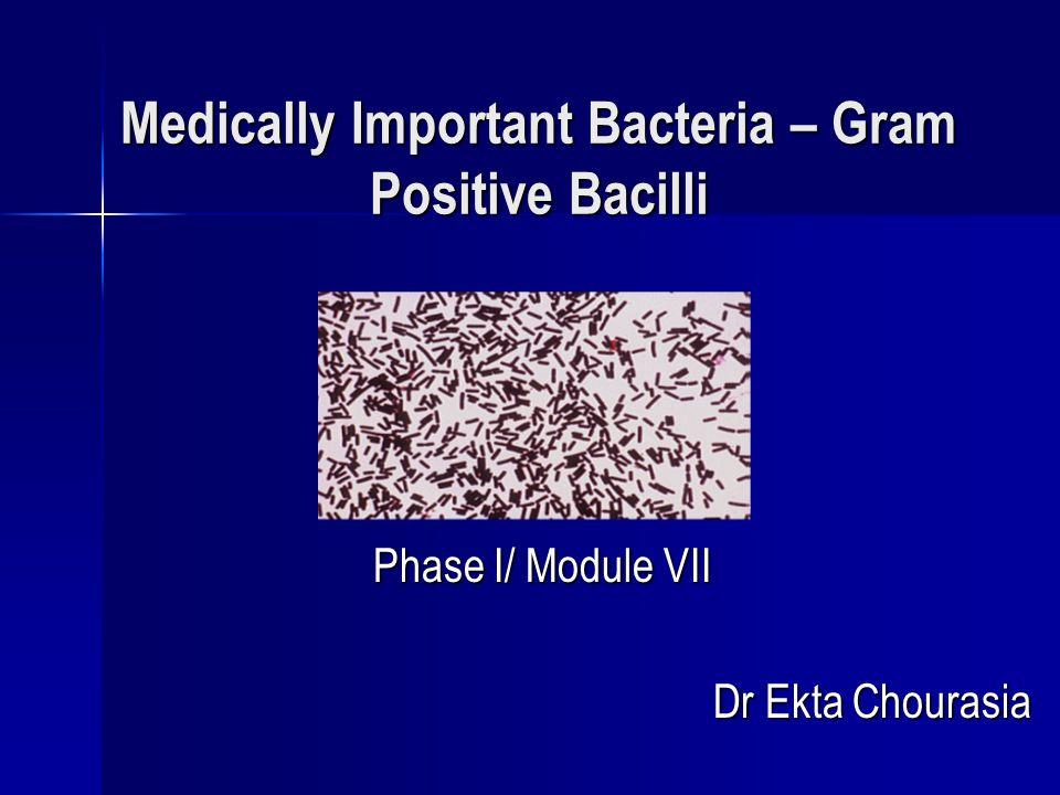 Medically Important Bacteria – Gram Positive Bacilli Phase I/ Module VII Dr Ekta Chourasia