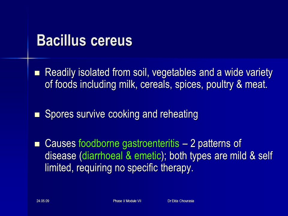 24.05.09Phase I/ Module VII Dr Ekta Chourasia Bacillus cereus Readily isolated from soil, vegetables and a wide variety of foods including milk, cereals, spices, poultry & meat.