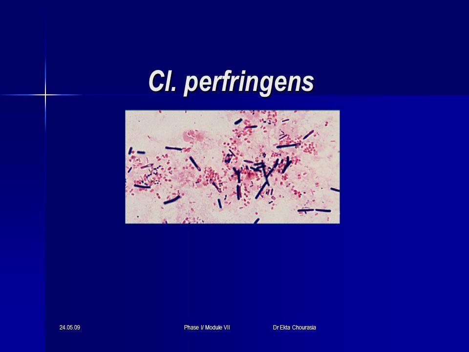 24.05.09Phase I/ Module VII Dr Ekta Chourasia Cl. perfringens