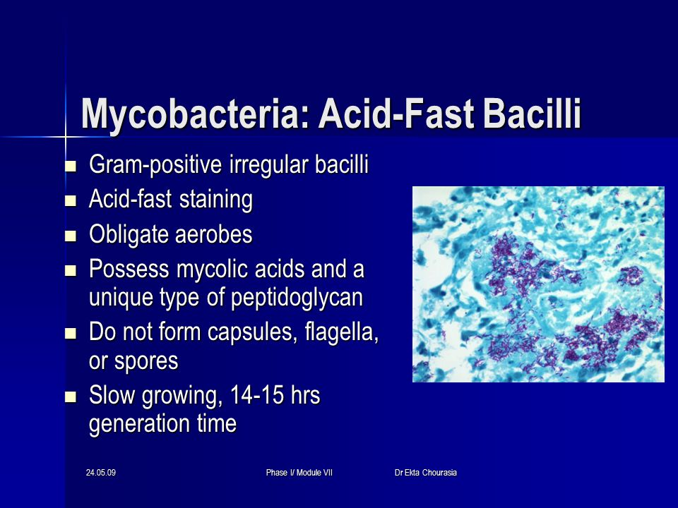 24.05.09Phase I/ Module VII Dr Ekta Chourasia Mycobacteria: Acid-Fast Bacilli Gram-positive irregular bacilli Gram-positive irregular bacilli Acid-fast staining Acid-fast staining Obligate aerobes Obligate aerobes Possess mycolic acids and a unique type of peptidoglycan Possess mycolic acids and a unique type of peptidoglycan Do not form capsules, flagella, or spores Do not form capsules, flagella, or spores Slow growing, 14-15 hrs generation time Slow growing, 14-15 hrs generation time