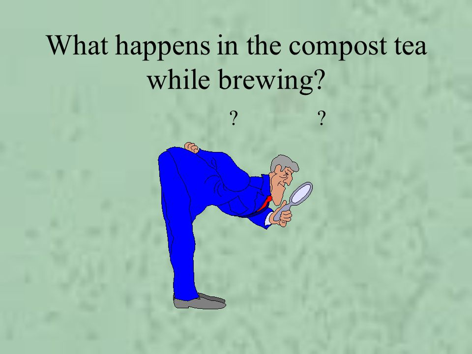 What happens in the compost tea while brewing? ?