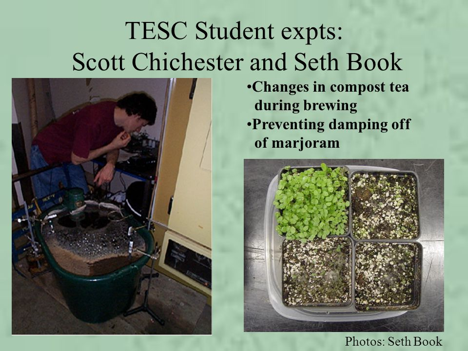 TESC Student expts: Scott Chichester and Seth Book Changes in compost tea during brewing Preventing damping off of marjoram Photos: Seth Book