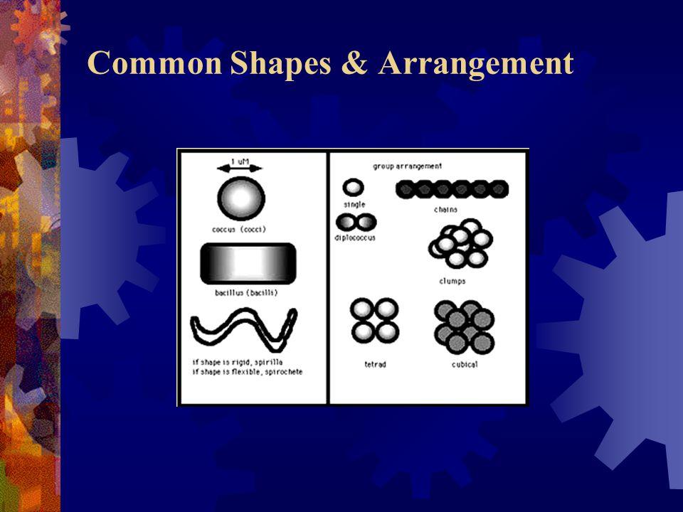 Common Shapes & Arrangement