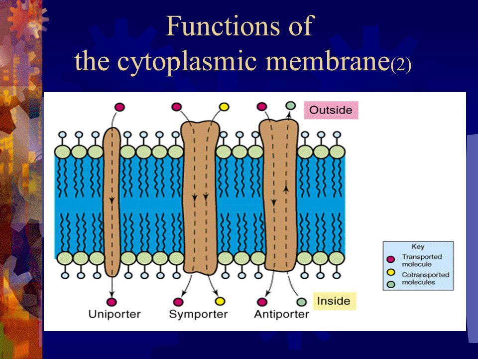 Functions of the cytoplasmic membrane (2)