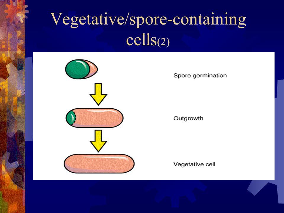 Vegetative/spore-containing cells (2)