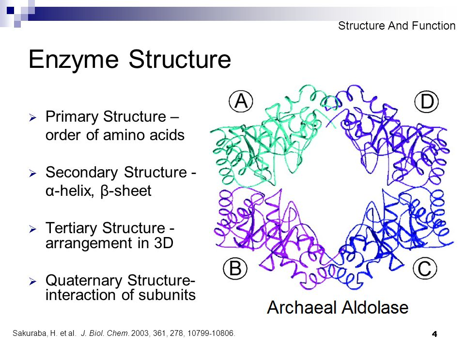 4 4 Enzyme Structure  Primary Structure – order of amino acids  Secondary Structure - α-helix, β-sheet  Tertiary Structure - arrangement in 3D  Qu