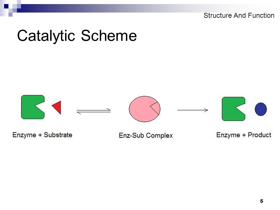 5 5 Catalytic Scheme Structure And Function