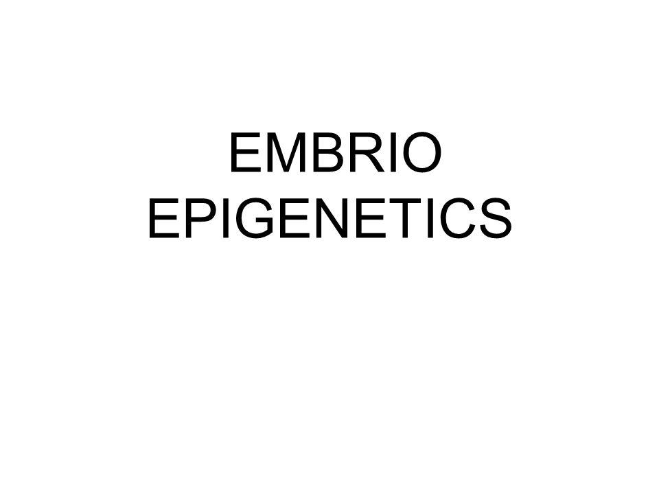 EMBRIO EPIGENETICS