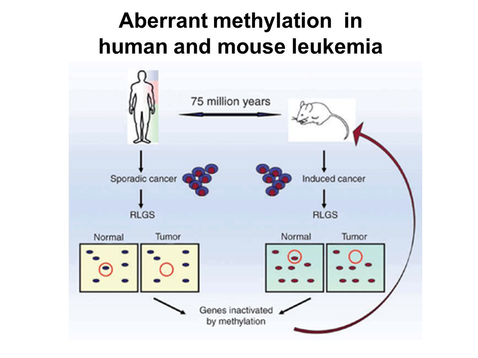 Aberrant methylation in human and mouse leukemia