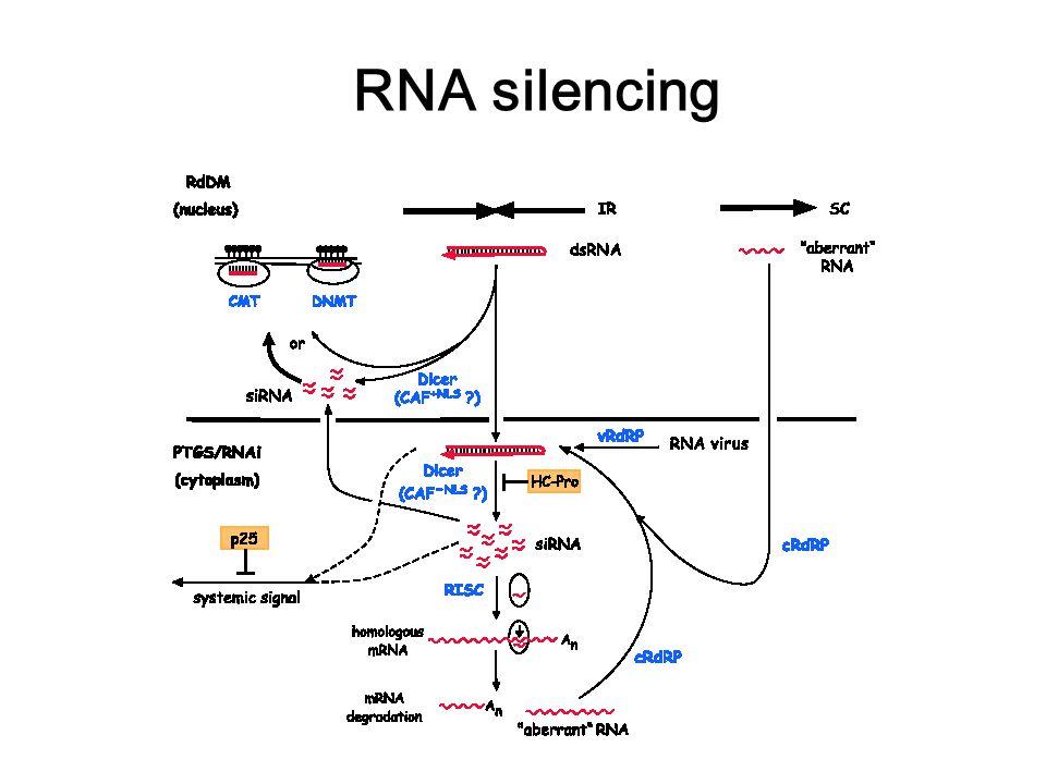 RNA silencing