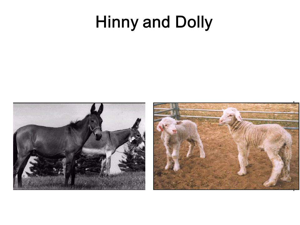 Hinny and Dolly