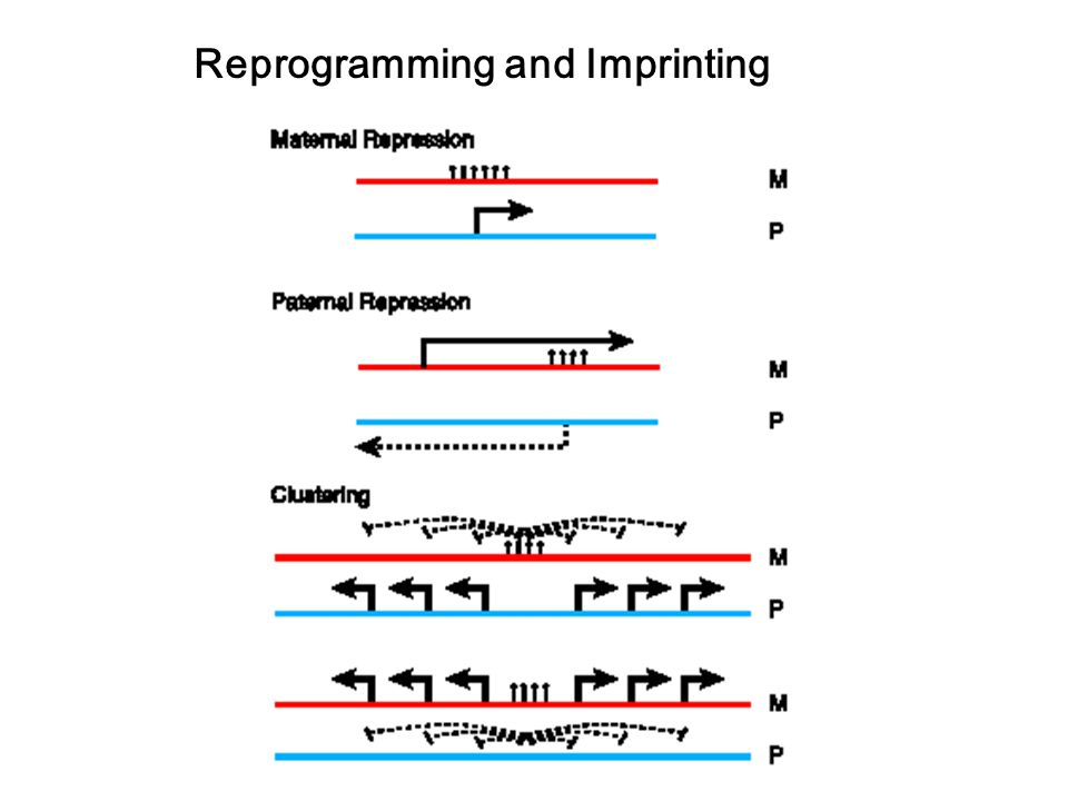 Reprogramming and Imprinting
