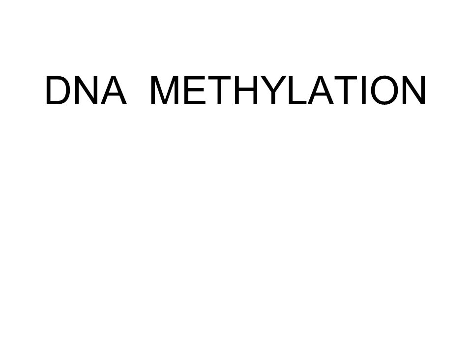 DNA METHYLATION