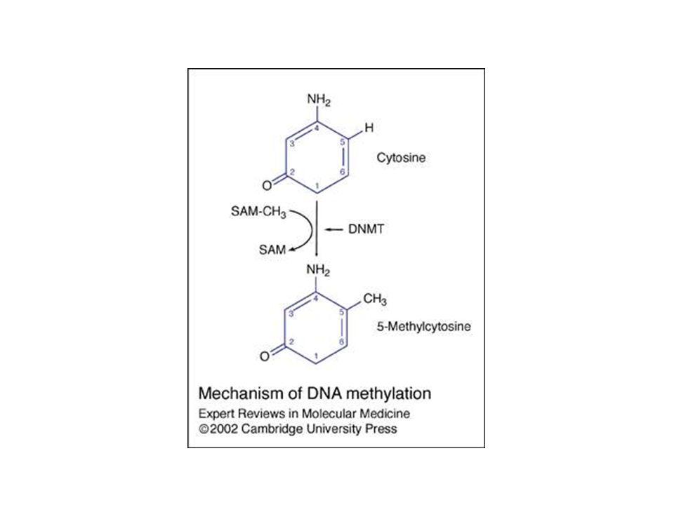 Methylation Genomics