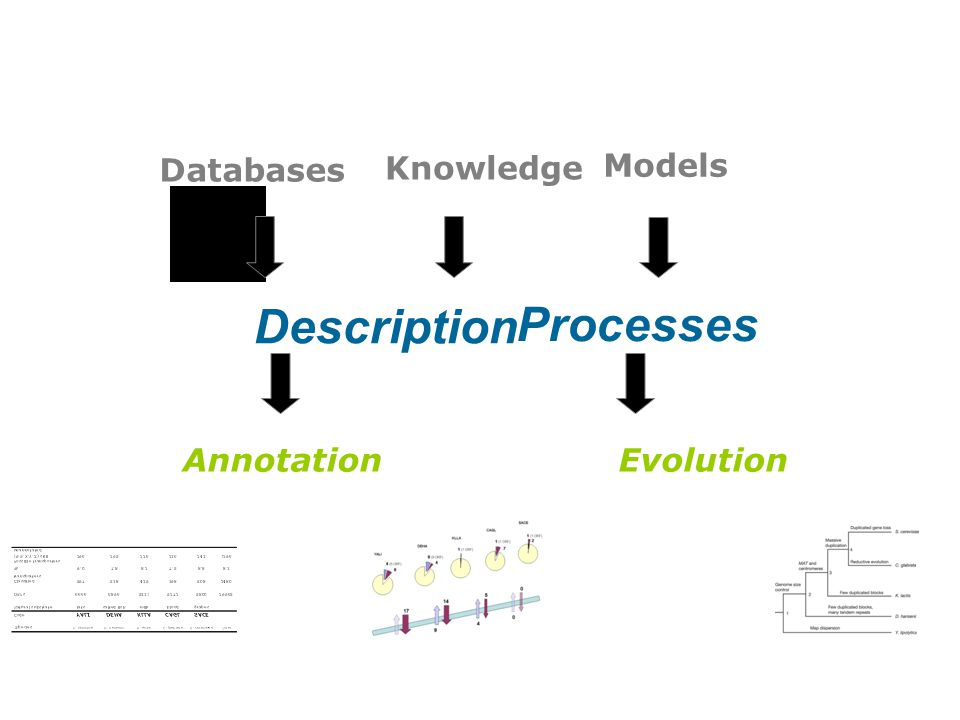 Databases Knowledge Models Description Processes AnnotationEvolution
