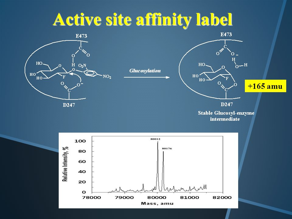 Active site affinity label +165 amu