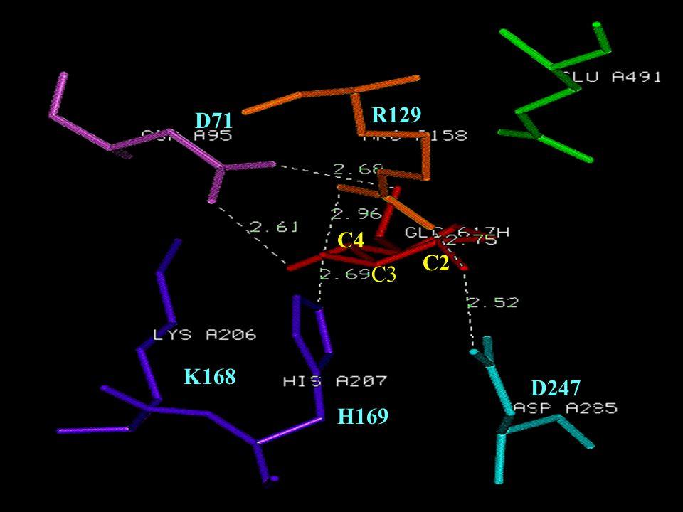Conserved Sequences D71 R129 K168 H169 D247 C3 C4 C2