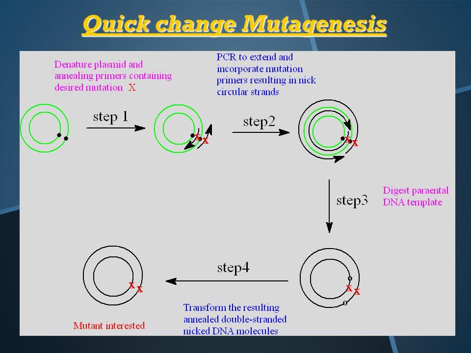 Quick change Mutagenesis