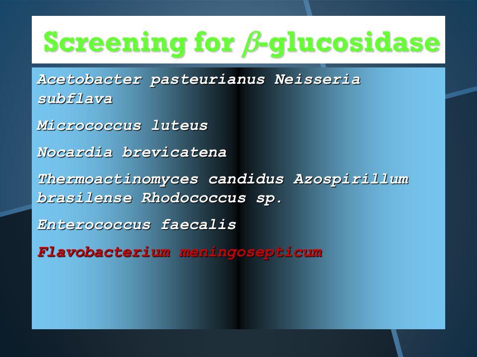 Screening for  -glucosidase Acetobacter pasteurianus Neisseria subflava Micrococcus luteus Nocardia brevicatena Thermoactinomyces candidus Azospirillum brasilense Rhodococcus sp.