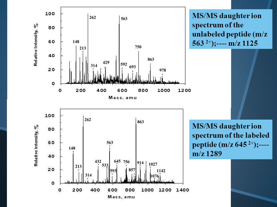 MS/MS daughter ion spectrum of the unlabeled peptide (m/z 563 2+ );---- m/z 1125 MS/MS daughter ion spectrum of the labeled peptide (m/z 645 2+ );----