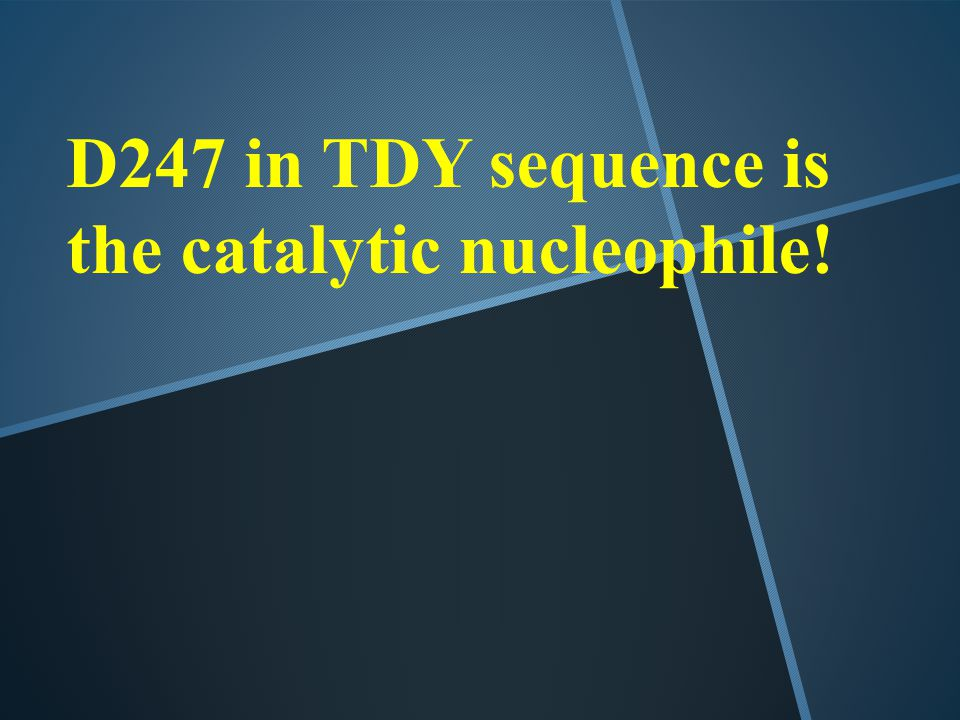 D247 in TDY sequence is the catalytic nucleophile!