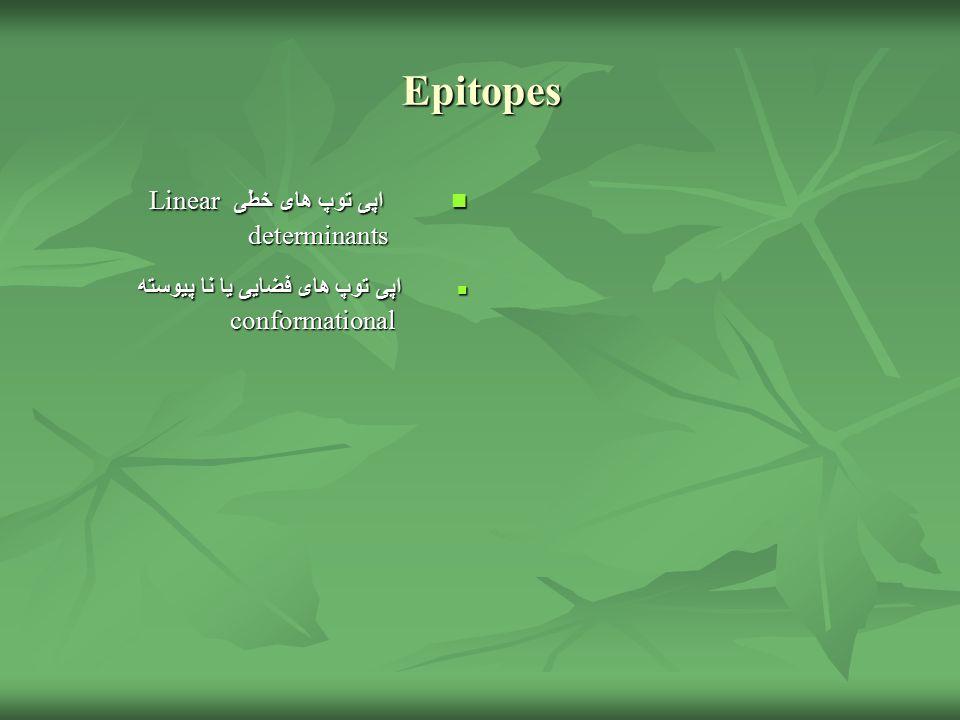 Epitopes اپی توپ های خطی Linear determinants اپی توپ های خطی Linear determinants اپی توپ های فضایی یا نا پیوسته conformational اپی توپ های فضایی یا نا پیوسته conformational