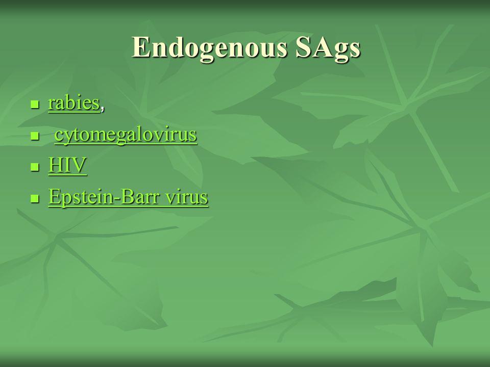 Endogenous SAgs rabies, rabies, rabies cytomegalovirus cytomegaloviruscytomegalovirus HIV HIV HIV Epstein-Barr virus Epstein-Barr virus Epstein-Barr virus Epstein-Barr virus