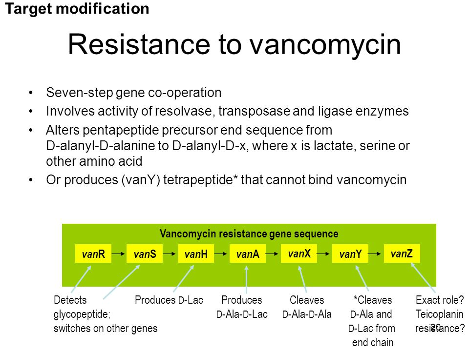 20 van R van Y van S van H van A van X van Z Vancomycin resistance gene sequence Detects glycopeptide; switches on other genes Cleaves D -Ala- D -Ala Produces D -Lac*Cleaves D -Ala and D -Lac from end chain Produces D -Ala- D -Lac Exact role.
