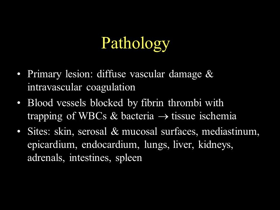 Pathology Primary lesion: diffuse vascular damage & intravascular coagulation Blood vessels blocked by fibrin thrombi with trapping of WBCs & bacteria