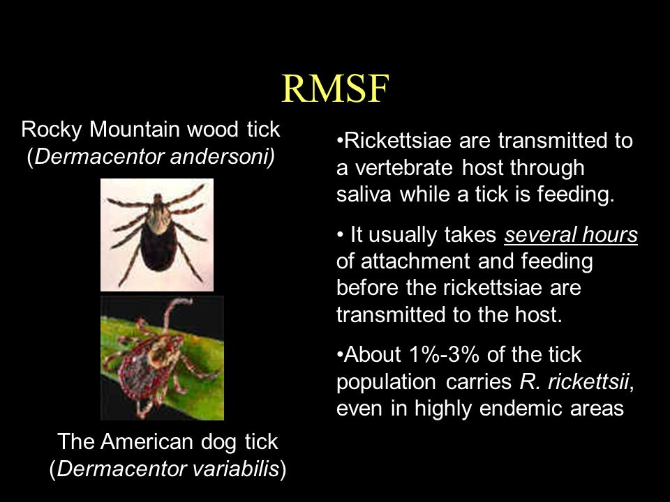 RMSF The American dog tick (Dermacentor variabilis) Rocky Mountain wood tick (Dermacentor andersoni) Rickettsiae are transmitted to a vertebrate host