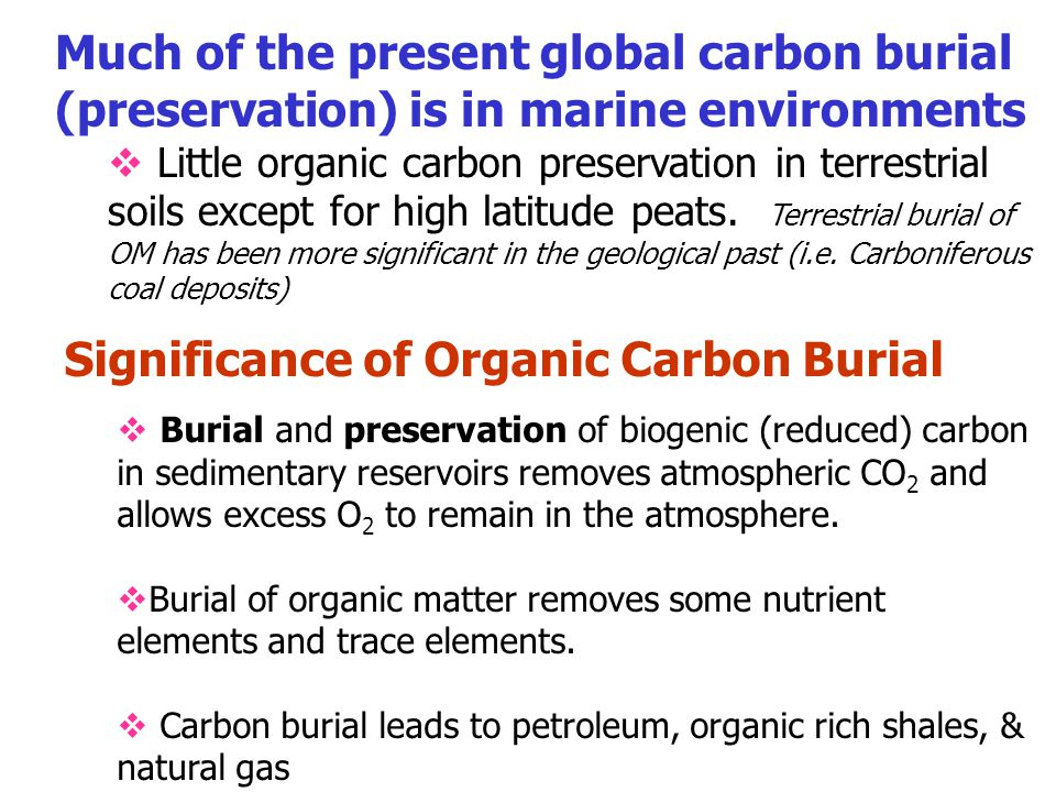 Much of the present global carbon burial (preservation) is in marine environments  Little organic carbon preservation in terrestrial soils except for