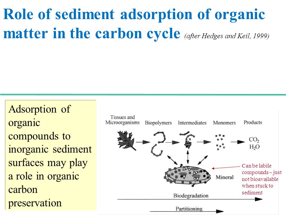 Role of sediment adsorption of organic matter in the carbon cycle (after Hedges and Keil, 1999) Adsorption of organic compounds to inorganic sediment