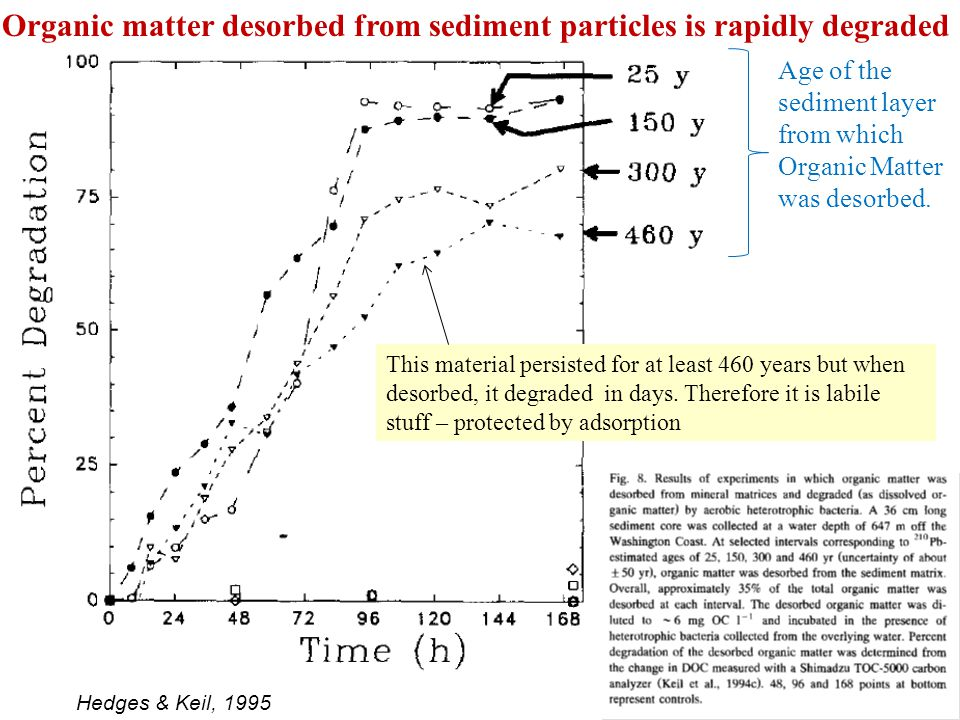 Age of the sediment layer from which Organic Matter was desorbed. Organic matter desorbed from sediment particles is rapidly degraded This material pe