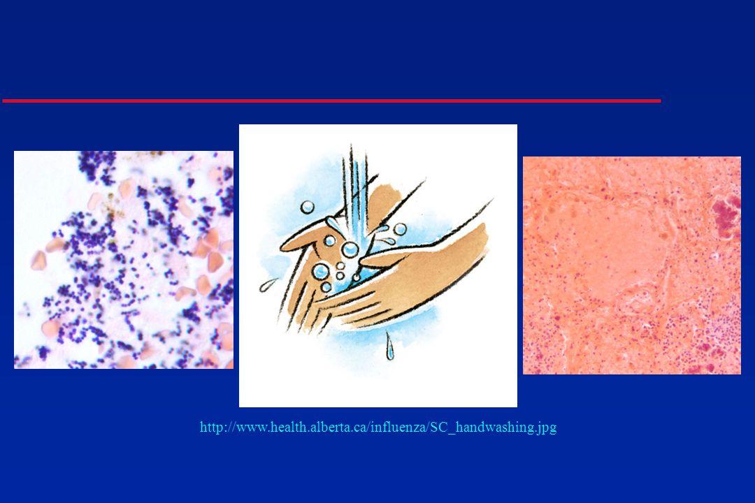 http://www.health.alberta.ca/influenza/SC_handwashing.jpg