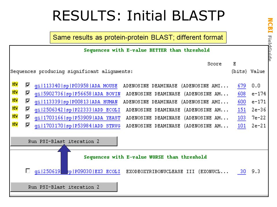NCBI FieldGuide RESULTS: Initial BLASTP Same results as protein-protein BLAST; different format