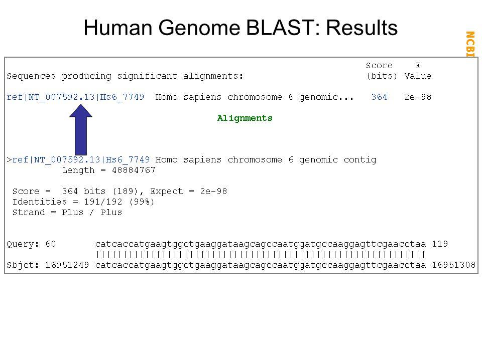 NCBI FieldGuide Human Genome BLAST: Results