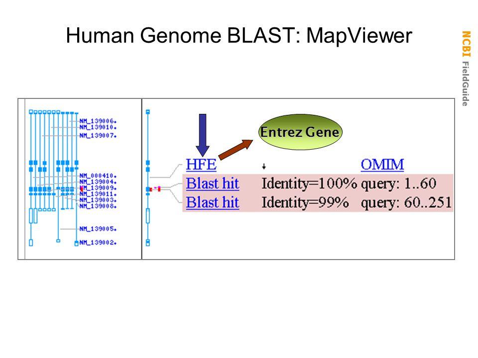 NCBI FieldGuide Human Genome BLAST: MapViewer Entrez Gene