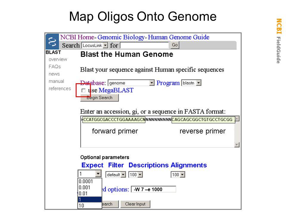 NCBI FieldGuide Map Oligos Onto Genome >CCATGGCGACCCTGGAAAAGCNNNNNNNNNNCAGCAGCGGCTGTGCCTGCGG -W 7 –e 1000 forward primer reverse primer