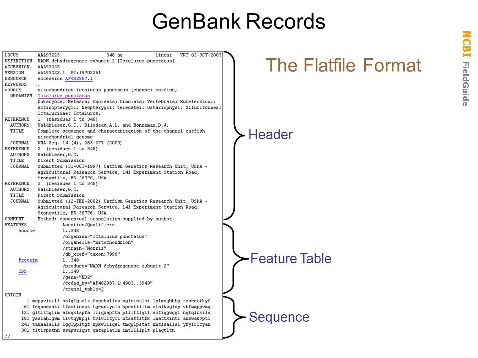 NCBI FieldGuide GenBank Records Header Feature Table Sequence The Flatfile Format