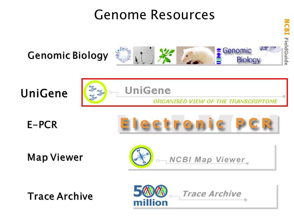 NCBI FieldGuide Genome Resources UniGene Trace Archive Map Viewer Genomic Biology E-PCR