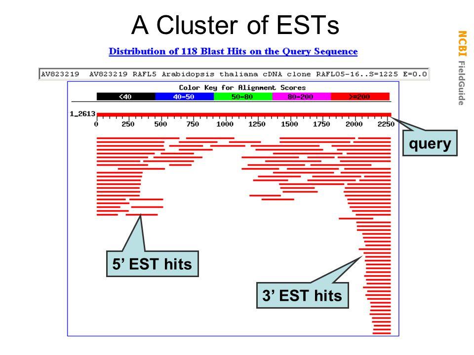 NCBI FieldGuide A Cluster of ESTs query 5' EST hits 3' EST hits
