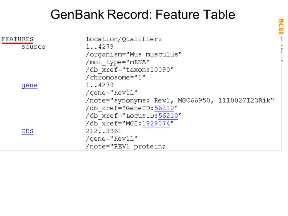 NCBI FieldGuide GenBank Record: Feature Table