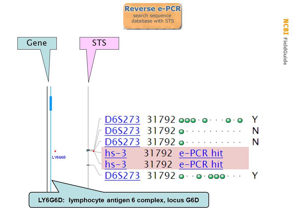 NCBI FieldGuide reverse e-pcr GeneSTS LY6G6D: lymphocyte antigen 6 complex, locus G6D